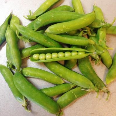 Польза и вред зеленого горошка